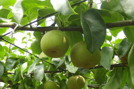 鈴木果樹園